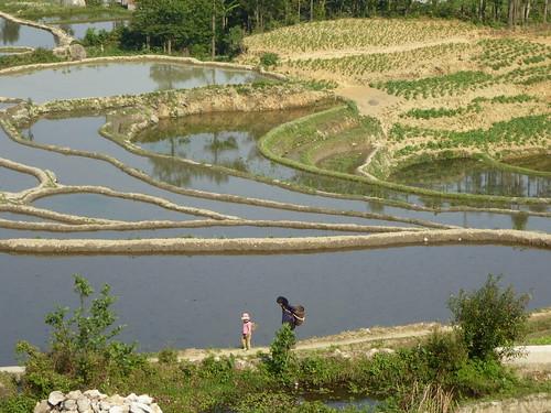 Yunnan13-Yuanyang 3-Huangcaoling (3)