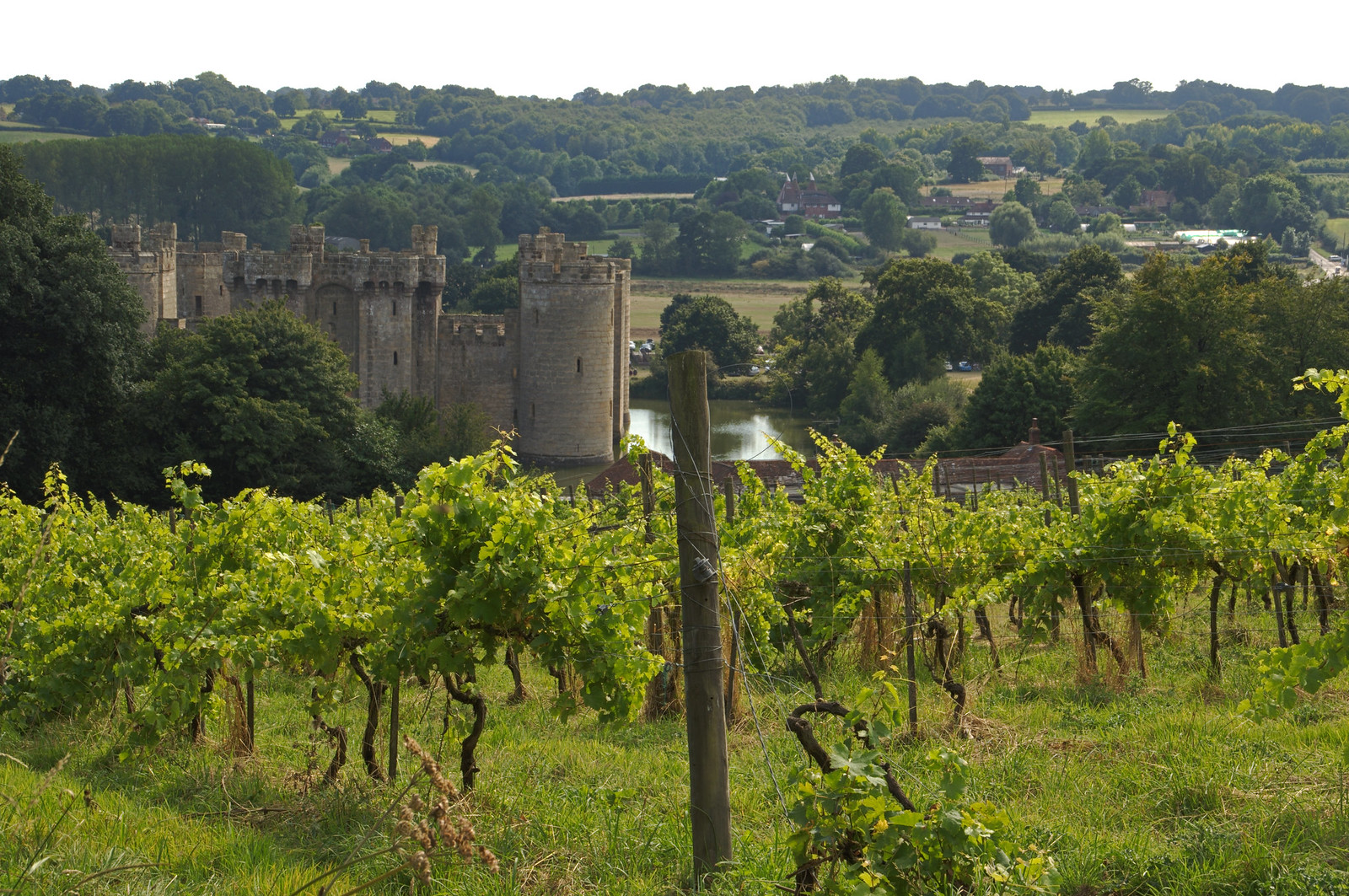 A Sussex vineyard to rival any French one...lol