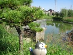 Starly in Mozu, Sakai 6 (Shirasagi park)