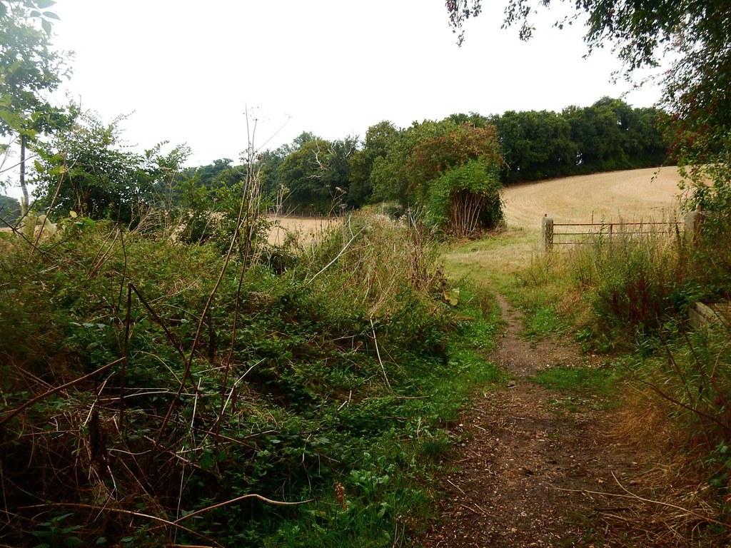 A field St Margarets Circular