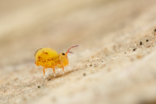 Fri, 09/23/2016 - 09:31 - First Collembola of the Autumn.