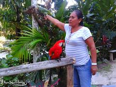Margarita, la lora, y el Guacamayo Rojo