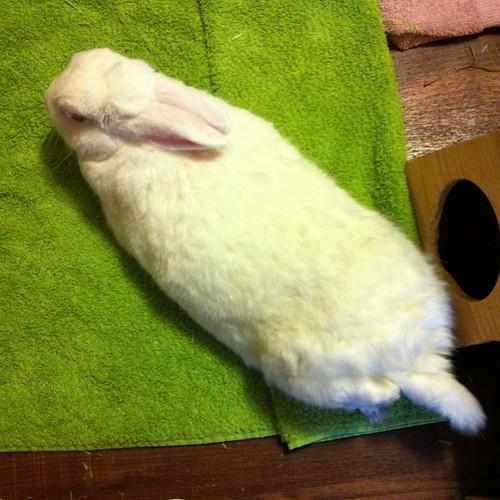 Long Bunny!