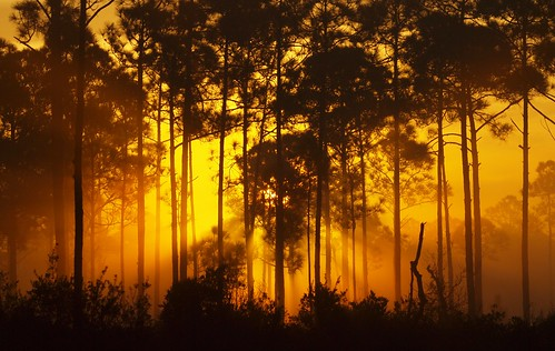 light sunset sun fog night forest florida rays burst martincounty