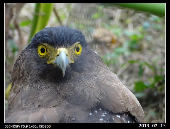 20130215_Eagle