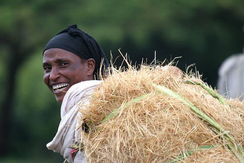 Women carry fodder to the market town of Woliso, Ethiopia