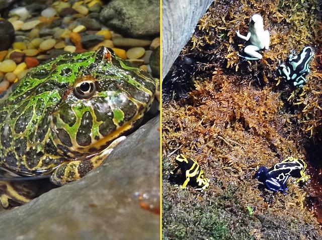 frog-room