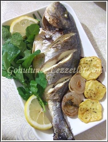 balık 1