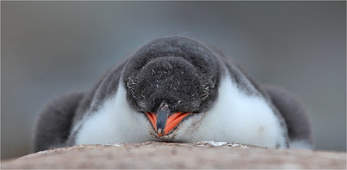 When I'm grown up I want to be a Penguin by Sandra OTR
