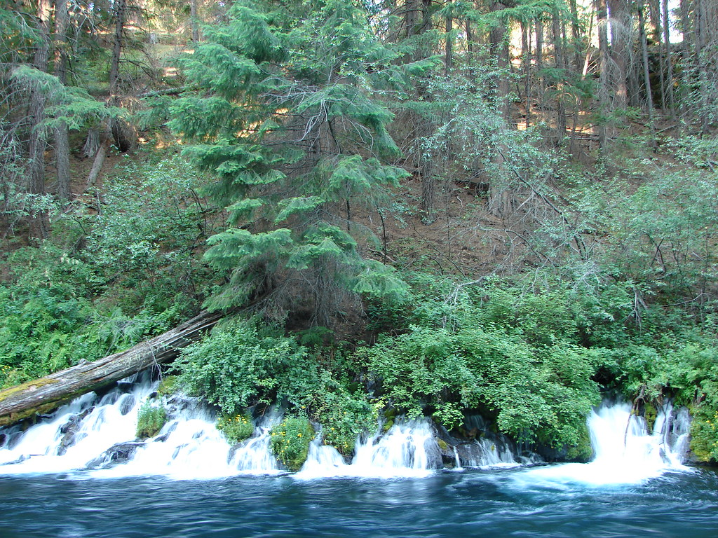 Springs along the Metolius River