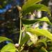 Garden Inventory: Lemon - 06