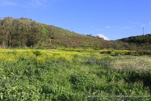 Spring meadow on Tenerife
