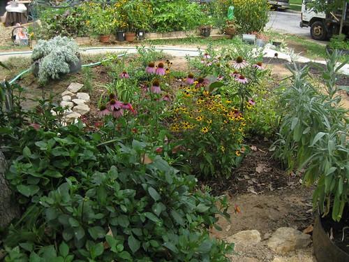 Image of a rain garden