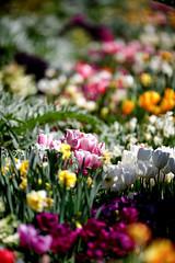 Tulips, et. al.