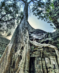 Of Roots and Sandstone.....