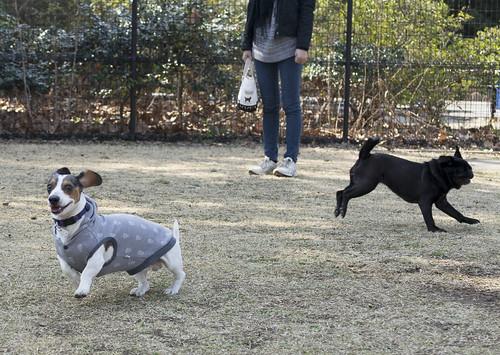 a dog run