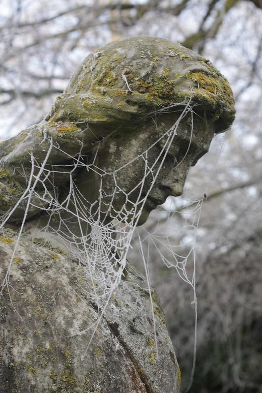 Mạng nhện cũng hóa đá