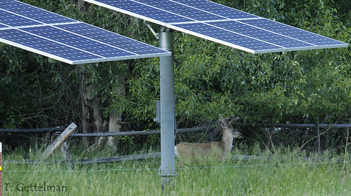 Taylor Research Station solar panels and 'Brutus' the Deer 1