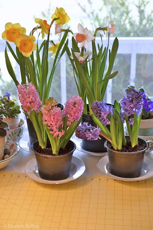 Easter flowers, daffodils and hyacinths, by Elizabeth Ruffing