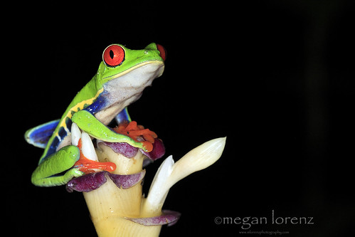 Flower Frog by Megan Lorenz