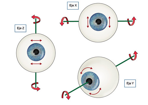 El ojo realiza movimentos de rotación según 3 ejes