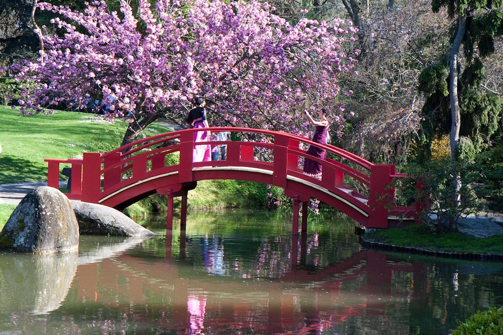 Jardin japonais#4 - Compans Caffarelli - Toulouse