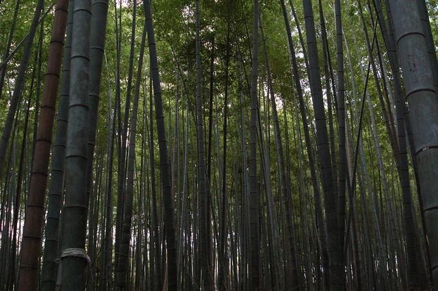 0819 - Arashiyama bosque bambú