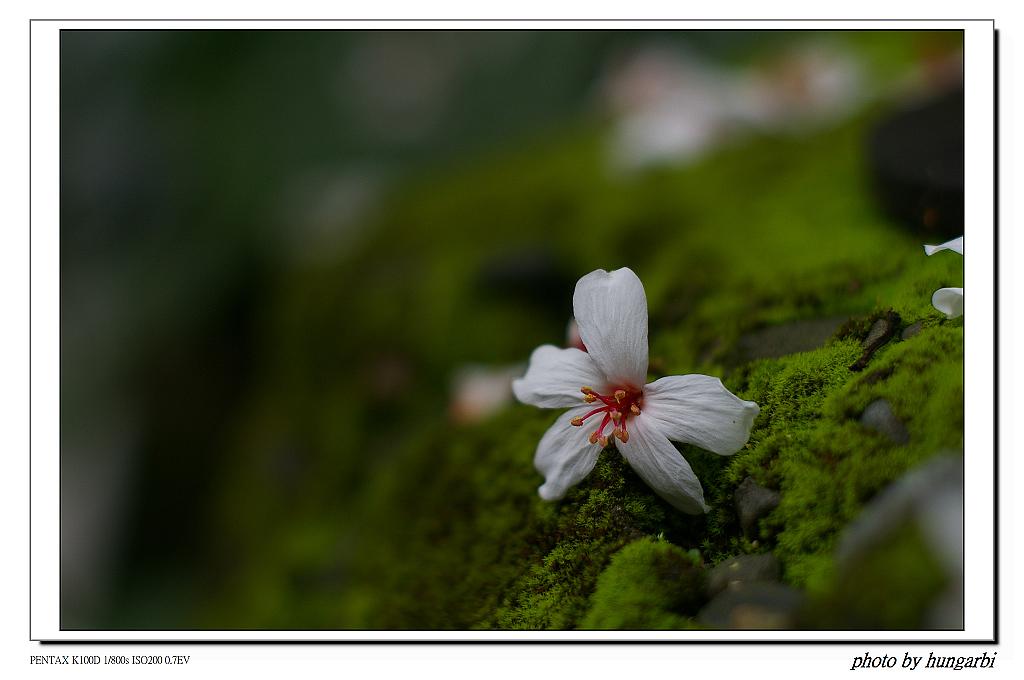 1020424微距及花卉習拍!