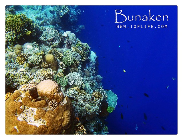 the beautiful palung bunaken