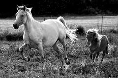 Noir et blanc - Sépia