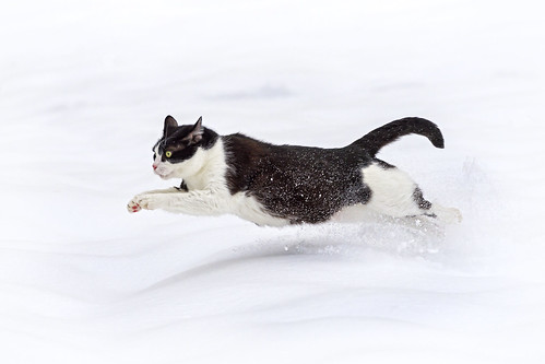 Oskar running in the snow II