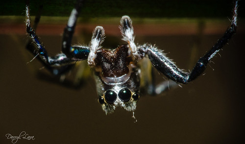 eyebrow spider (4 of 4)