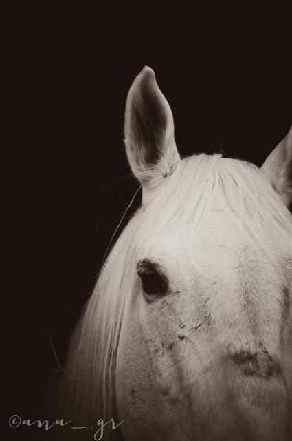 a white horse