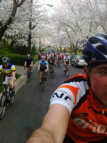 Riding through the canopy of cherry blossoms with the gang