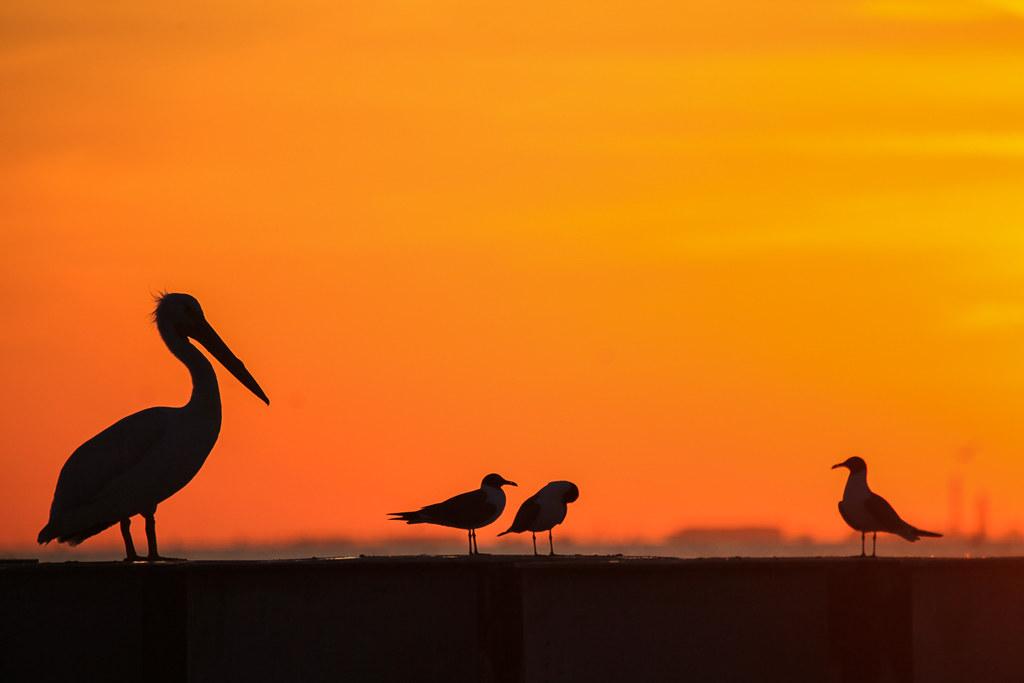 Padre Island, Texas
