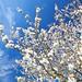 Flowers in the sky ©[Pierrot²]