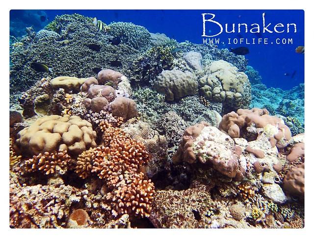 trumbu karang bunaken 3