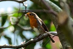 Robinomnomnom