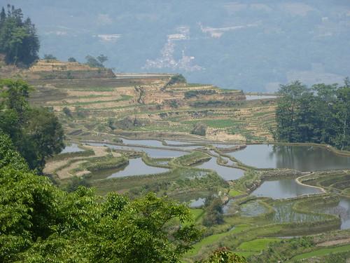 Yunnan13-Yuanyang 10-Luomadian (7)