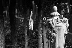 jewish cemetery...
