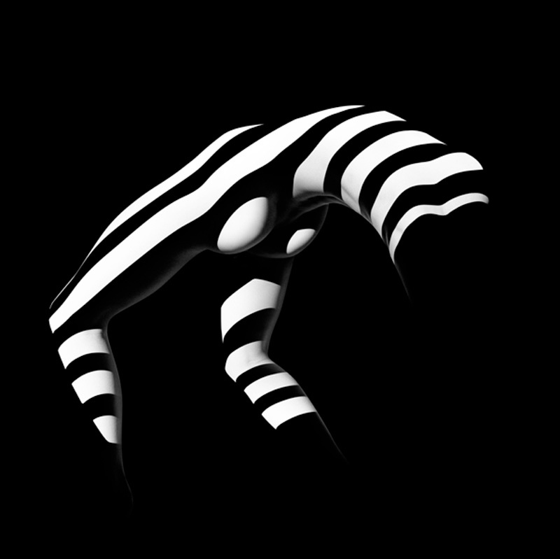 Francis Giacobetti Zebras 07