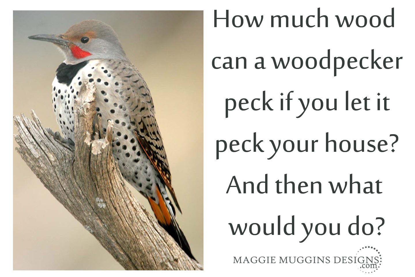 Woodpecker Solution