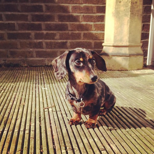She loves the sun #lolathesausage