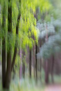 Woods #3