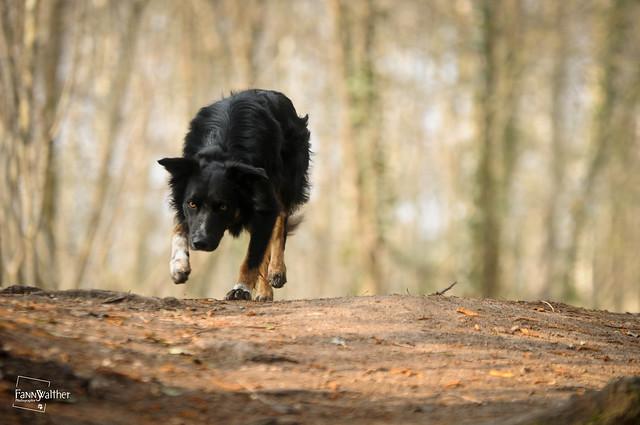 A wolf ?