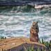 Squirrel Posing at La Jolla Cove, California