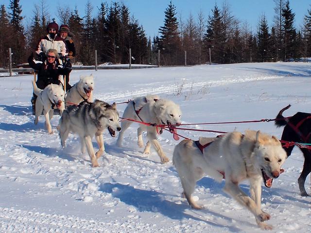 Dogsledding with Wapusk Adventures