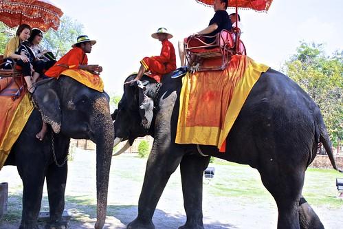elephant gossip