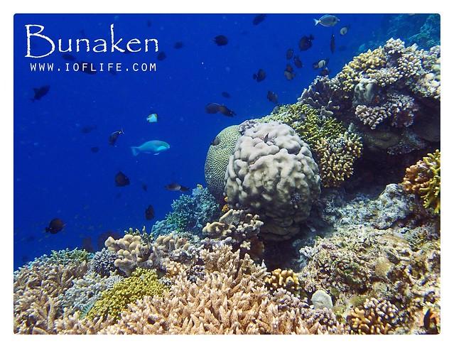 trumbu karang bunaken 2