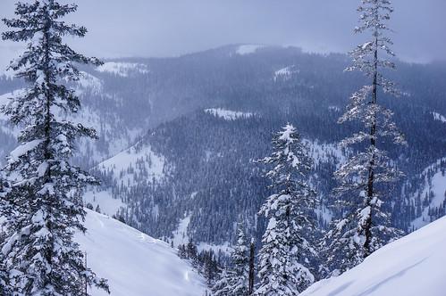 winter mountain snow tree nature day peak summit slope avalanchesnow